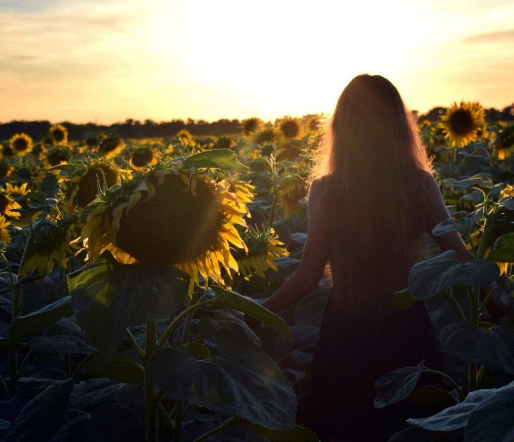ילדה מתהלכת בשדה חמניות